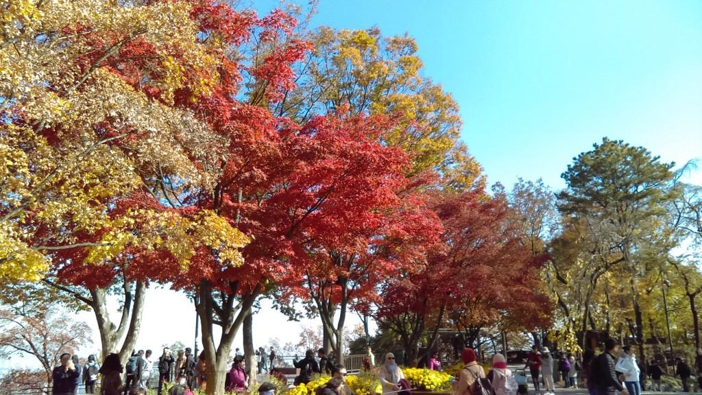 ↑南山的楓紅