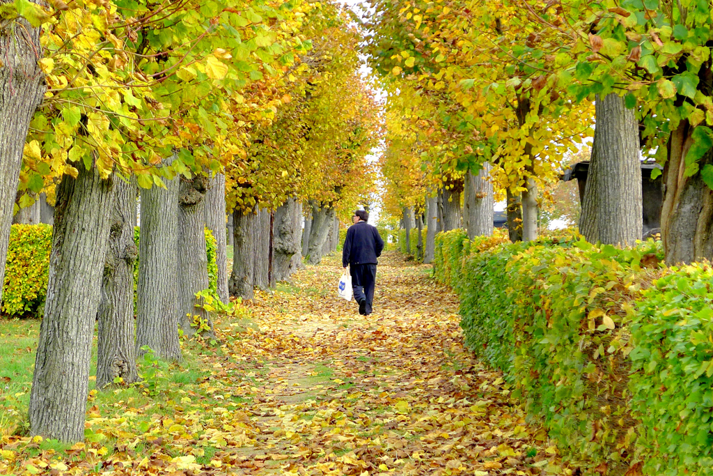 秋意深濃,黃葉遍地的主護村林間。