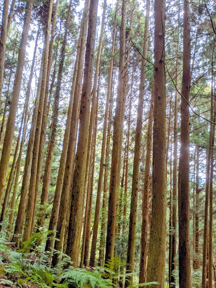 在林木間享受森林浴。